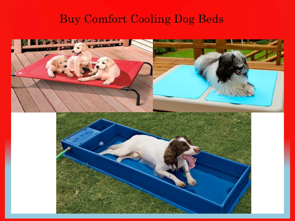 Choose High Quality and Uniquely Designed Dog Beds