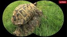 Nos amies les bêtes de sexe : La tortue Hermann