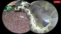 Nos amies les bêtes de sexe : L'anaconda