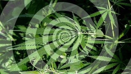 Shocking Study: Pot Makes You Paranoid