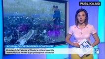 Guvernul de la KIEV. Separatiştii au furat 38 de trupuri ai pasagerilor Boengului 777 şi distrug dovezile crimei