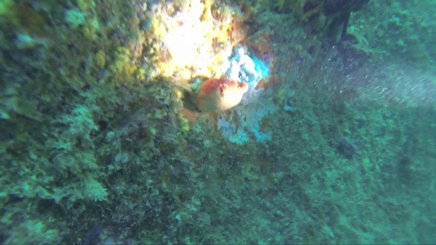 Diving Argeles (juillet 2014)