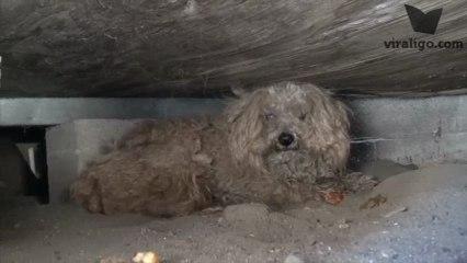 Sahibinin Döneceğini Umarak Yılmadan Bir Yıl Boyunca Bekleyen Köpek Woody
