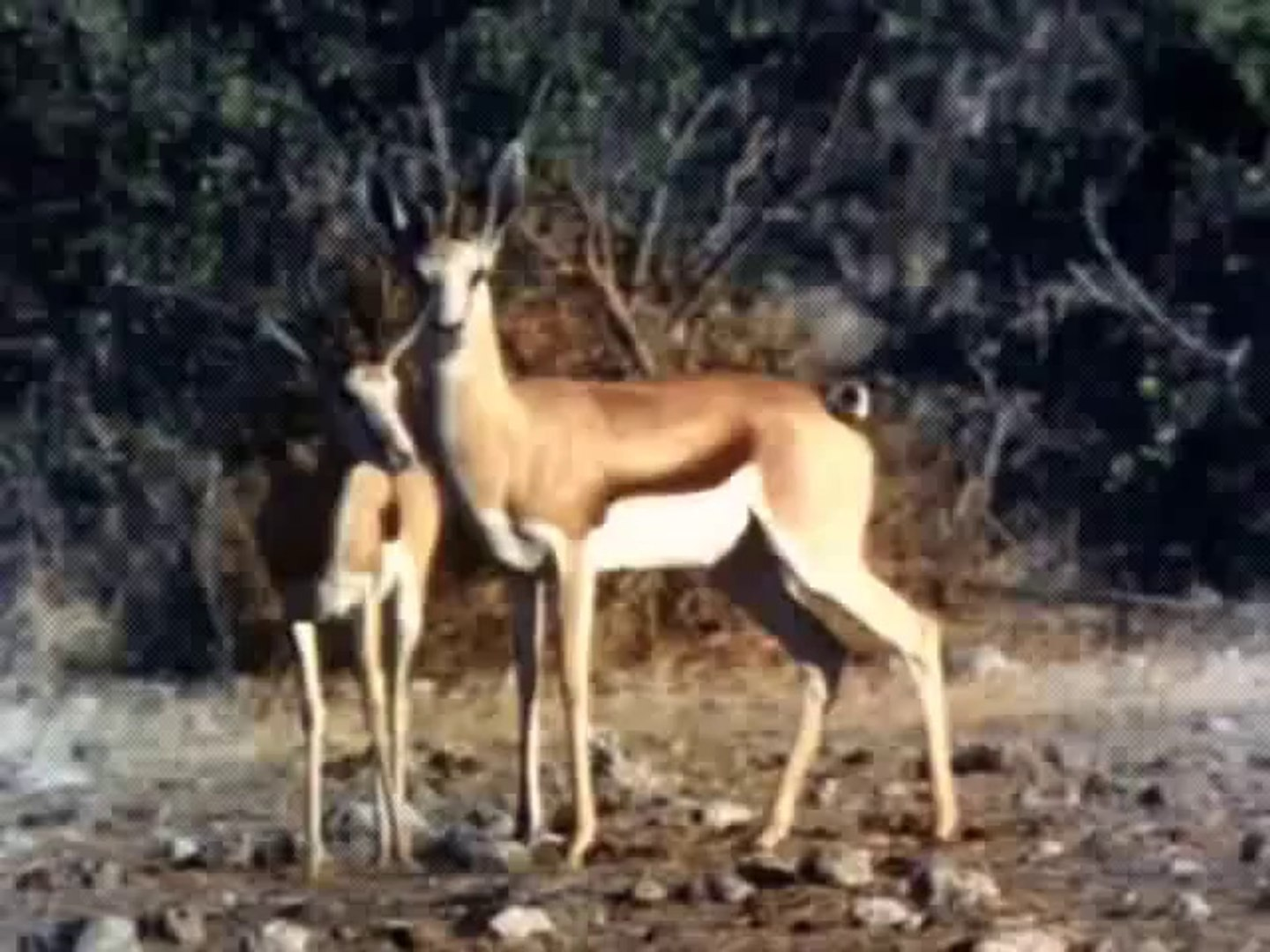 Must Watch - Amazing Deadly Fight between Wild Animals, Dangerous Deadly Fight Between Animals