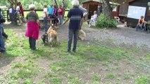 Hautes-Alpes: Concours d'obéissance pour les chiens à St Blaise