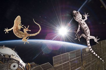 Russian Space Agency Regains Control Of Gecko Sex Satellite After Three Day Loss Of Contact!