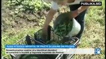 Rusia anunță un nou embargo pentru unele fructe și legume din Polonia  Anterior, au fost supuse restricţiilor fructele şi conservele din fructe şi legume de producţie moldovenească, dar şi vinurile şi apa minerală din Georgia