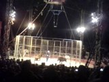 la maltraitance dans les cirques