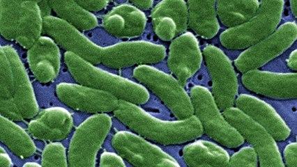 Flesh-Eating Saltwater Bacteria Has Now Killed 10 People