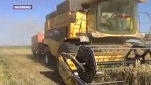 Muş'da buğday ve arpa hasatı ümit verdi
