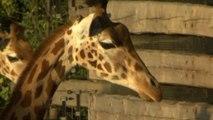 Disturbing photo shows moments before giraffe bridge smash