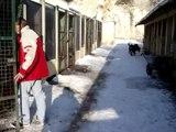 NOEL DES ANIMAUX AU REFUGE ET SEANCES DE JEU SOUS LA NEIGE LE 19 DECEMBRE 2009 1