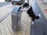 Insolite un chien dépose une canette dans une poubelle de Calais