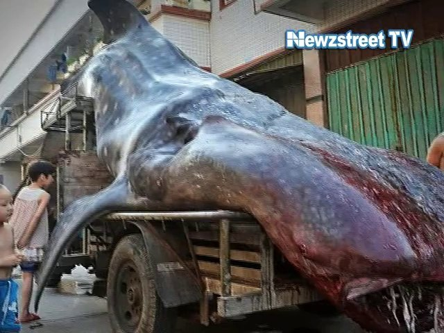 Viral:  Truck drags 16 ft long whale in China