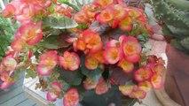 De fleurs en fleurs chez nous  HD 720p