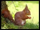 Ecureuils mignons