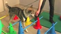 Hydrothérapie animale : les chats et les chiens à l'eau