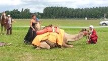 Dromadaires à La Chartre sur le Loir - spectacle cheval/dromadaire 2