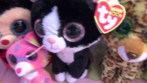 Beanie Boo Collection with lots of Beanie Boos