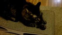 Miglio Design Doppio Cat Scratcher Lounge