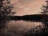Fleuve : Balade sur les bords de Loire : Nature et Loire sauvage
