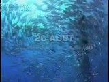 Okyanus Dünyası 3D - Fragman