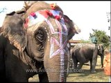 Painted elephants at  Kaziranga Elephant Festival parade