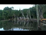 Boating through backwater estuary - Nicobar Islands