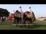 Elephant parade during the Elephant Festival, Jaipur