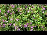 Bhutan kurjey festivals flowers hdv tape 10 4 26