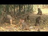The Kingdom of Macaques  - Time Lapse
