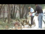 Act of kind generosity gone awry - bratty macaques being fed!