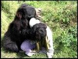 Sloth Bear attacking man in Assam