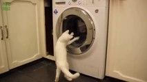 Chats vs machine à laver - Compilation d'animaux marrant 2014