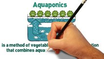 DIY Aquaponics Designs and Systems