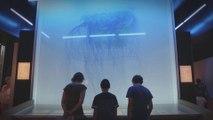 """""""Méduses"""" et """"Jeux d'eau"""", au Muséum du Havre, à voir absolument !"""
