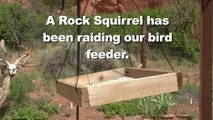Homeowners Grease Pole To Stop Squirrel From Raiding Bird Feeder
