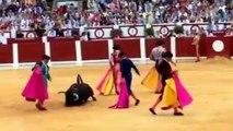praca de touros de Gijon - touro não consegue manter-se de pé