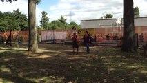 Jeux équestres mondiaux à Caen