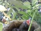 uccelli e nido montato giorno 1