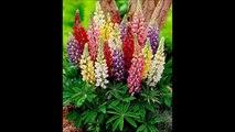 ° Fleurs cachées °
