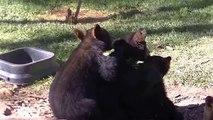 Instant cute : ce trio d'ours en pleine séance de câlins