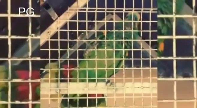 Le perroquet de Falcao qui chante ses buts
