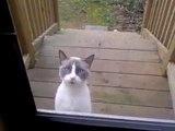 Un chat énervé discute devant la porte