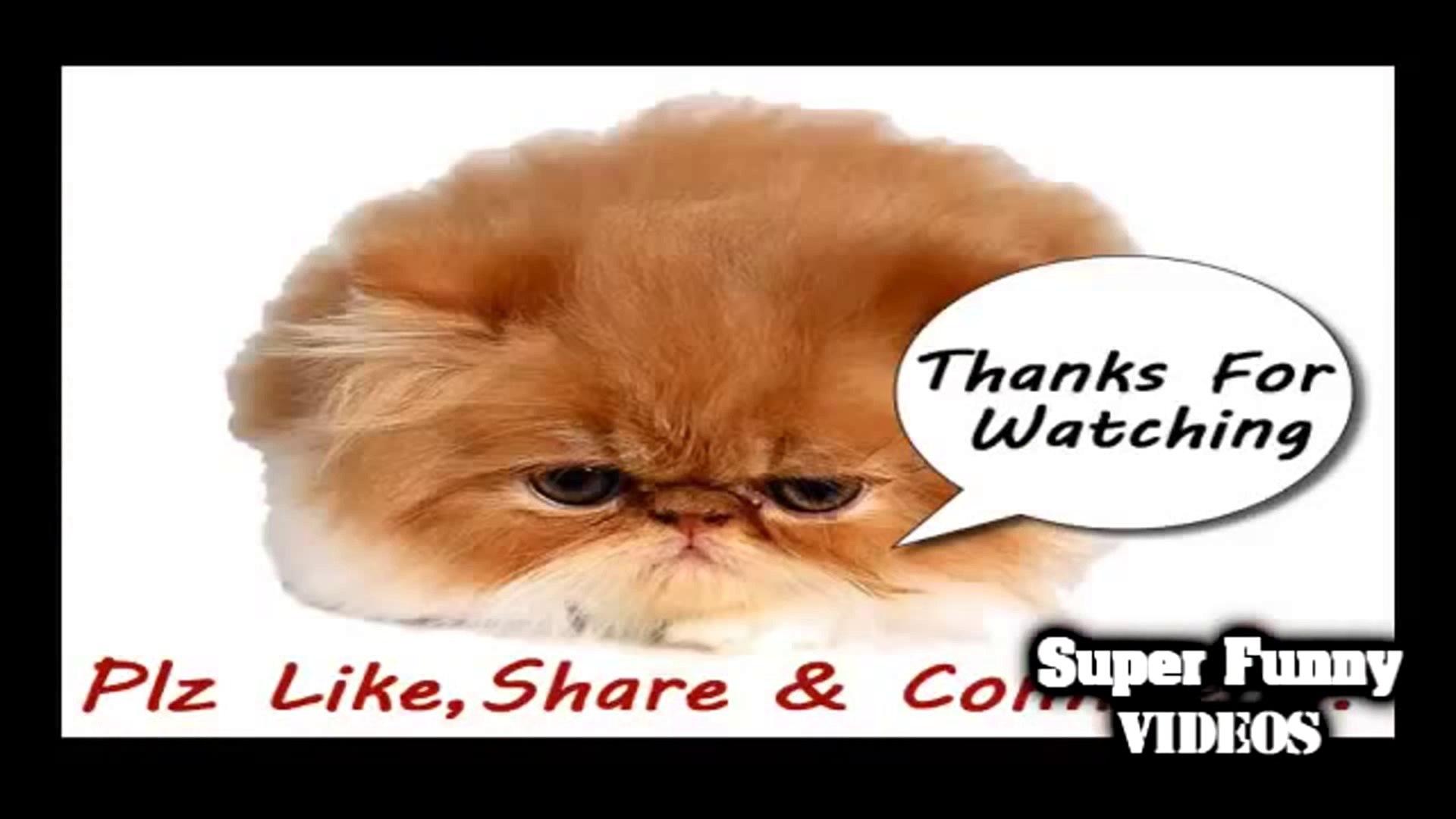 Funny cats vines 2014 - Best of funny cats vines 2014 - Funny cats talking - NEW(Risingformuli)