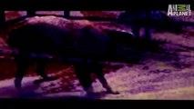 Weird, True & Freaky- The Sleepwalking Dog
