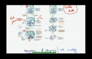 FSc Biology Book2, CH 21, LEC 7: Apoptosis and Necrosis