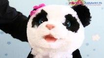 Pom Pom My Baby Panda Plush Pet / Panda PomPom - Furreal Friends - Hasbro - A7275 - Recenzja