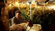 Trailer Park Boys: Don't Legalize It - Trailer for Trailer Park Boys: Don't Legalize It