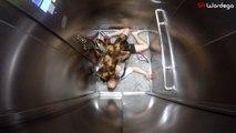 Caméra cachée: L'attaque du chien déguisé en araignée mutante